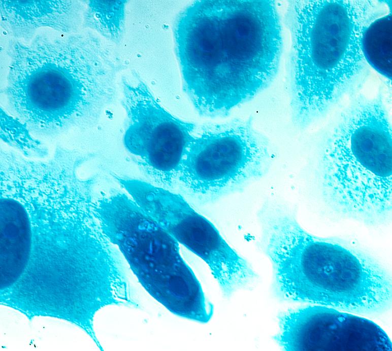 Produkte für die klassische Zellkultur bei neoFroxx