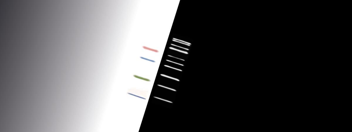 WesternFroxx all in one Proteinmarker